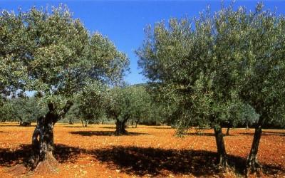 Agricultura Marroquina