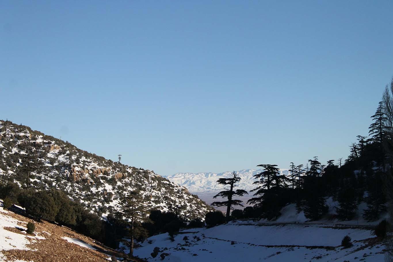 Cedros - Marrocos