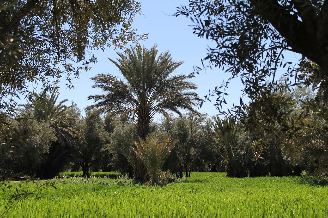 Skoura - Marrocos