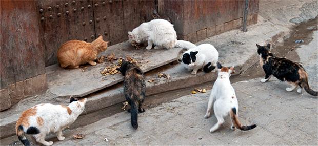 fes cats